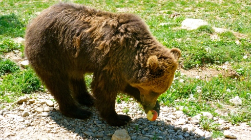 Bear Tracking in Romania www.untravelledpaths.com
